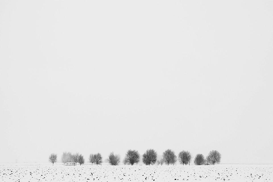 Ein schneebedecktes Feld mit kahlen Bäumen.