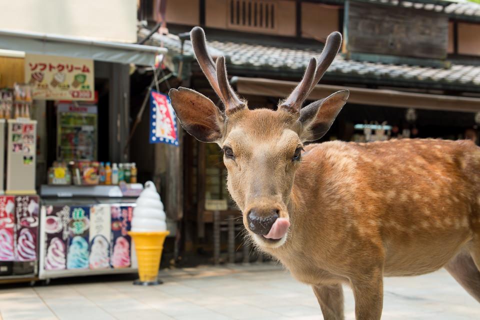 Ein junger Hirsch steht vor einem Eisladen und leckt sich die Schnute.