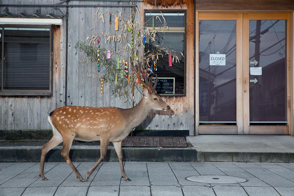 Ein Hirsch passiert ein geschlossenes Geschäft.