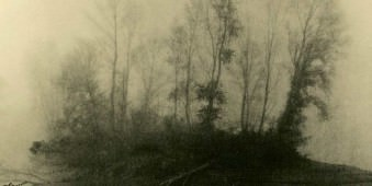 Eine Baumgruppe