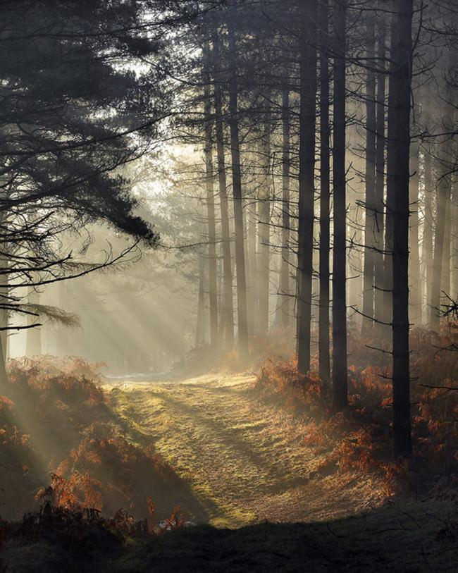 Herbstliche Sonnenstrahlen dringen durch die Wipfel eines Nadelwalds auf einen Weg durch das Unterholz.