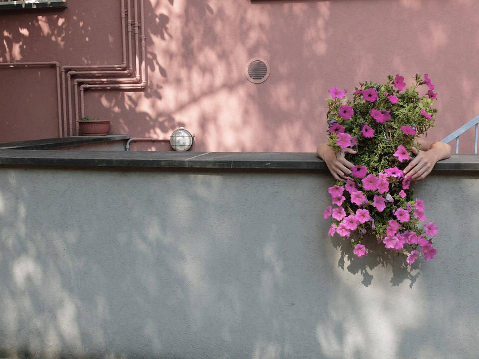 Hände umarmen eine Pflanze auf einem Balkon.