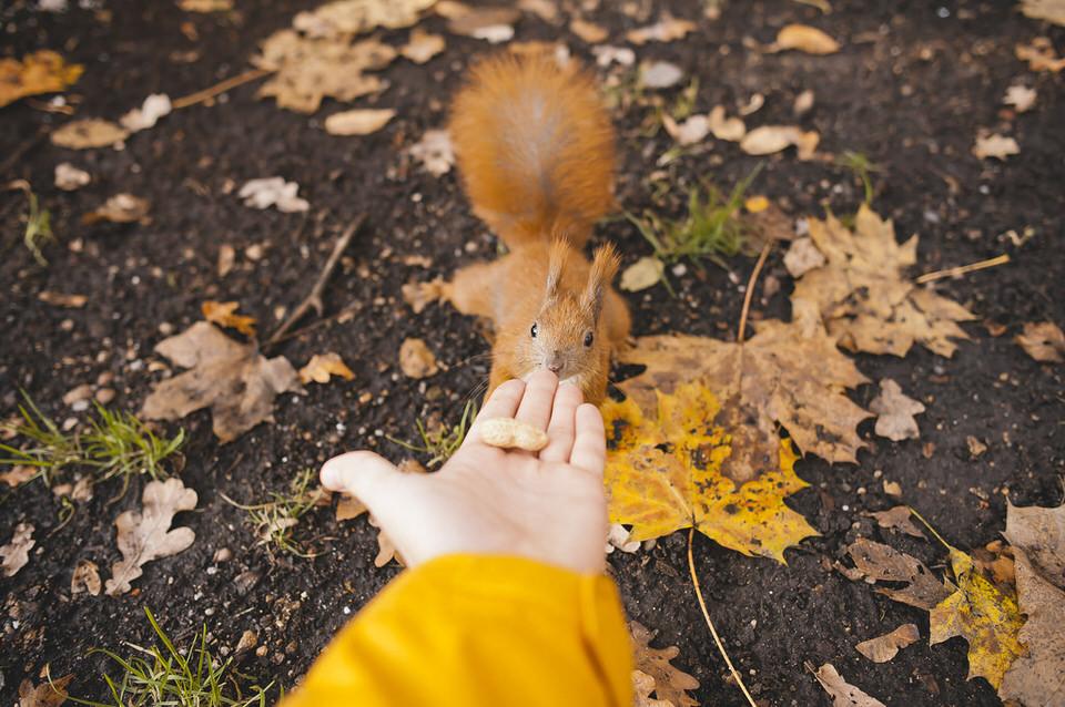 Ein zutrauliches Eichhörnchen.