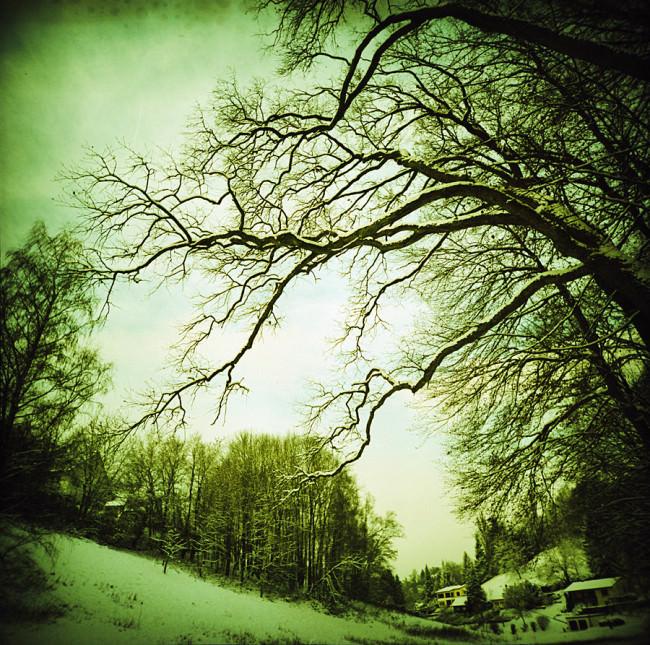 Verschneite Landschaft in Grüntönen.