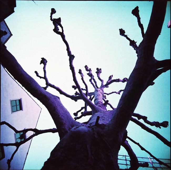 Ein knorriger Baum und ein Hausgiebel.