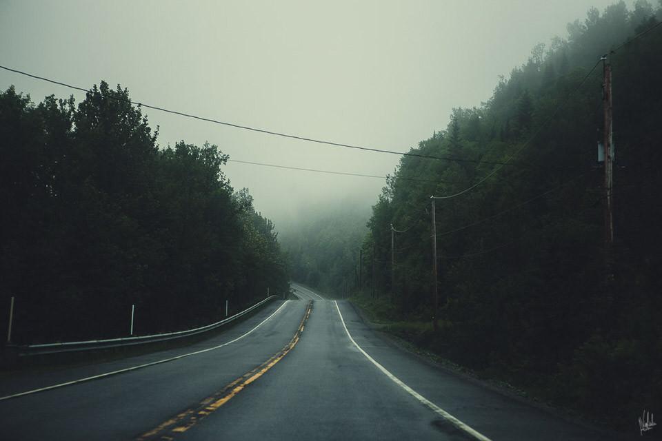 Eine Straße führt durch einen nebligen Wald.