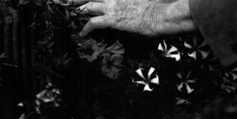 Vaters Hände © Marit Beer