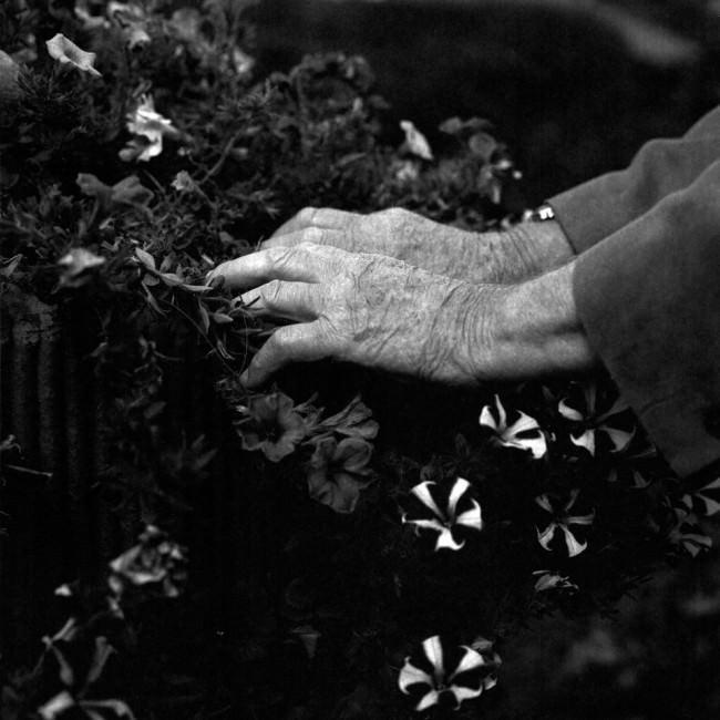 Alte Hände berühren Pflanzen.