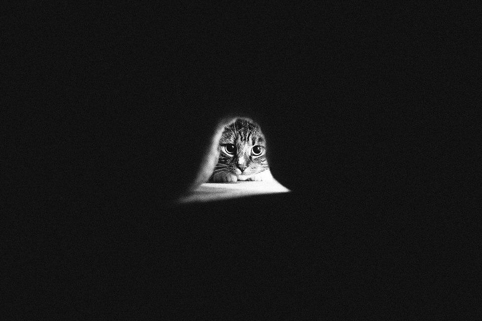 Eine Katze schaut durch ein Loch ins Dunkel.