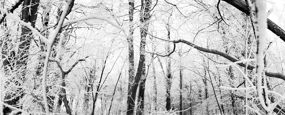 Verschneites Waldpanorama
