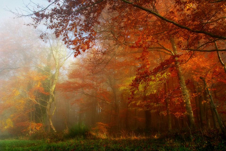Ein herbstlich-roter Wald im Nebel