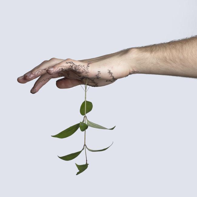 Eine Pflanze hängt in einer Hand