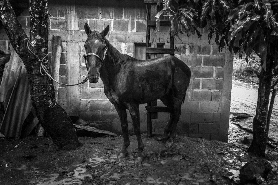 Ein Pferd vor einem Haus