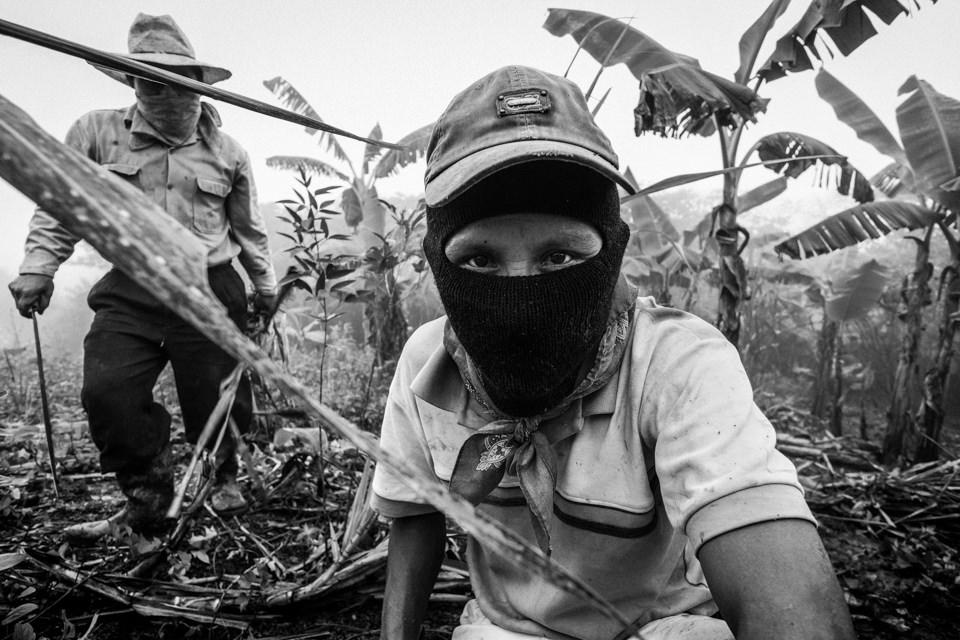 Auf einer Bananenplantage in den Bergen von Chiapas.