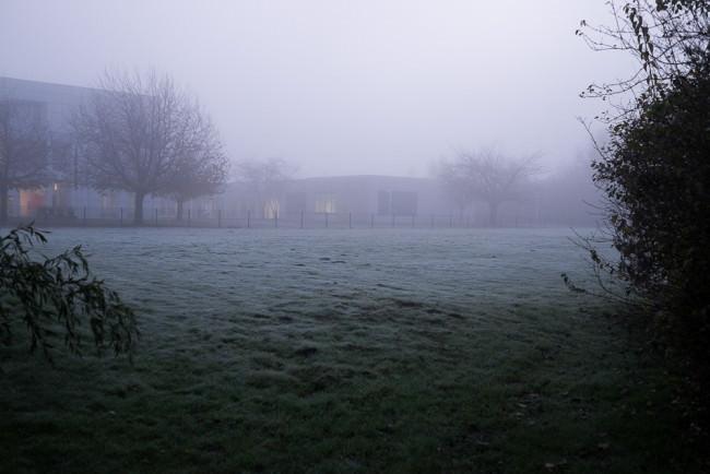 Ein Wiese voller Frost und Nebel