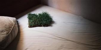 Ein Stück Rollrasen liegt auf einem Bett.
