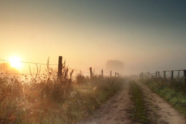 Sonnenuntergang am Feldrand.