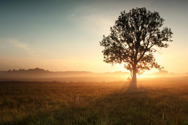 Baum und Sonnenuntergang.