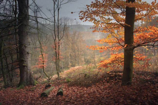 Laubfärbung und Wald.