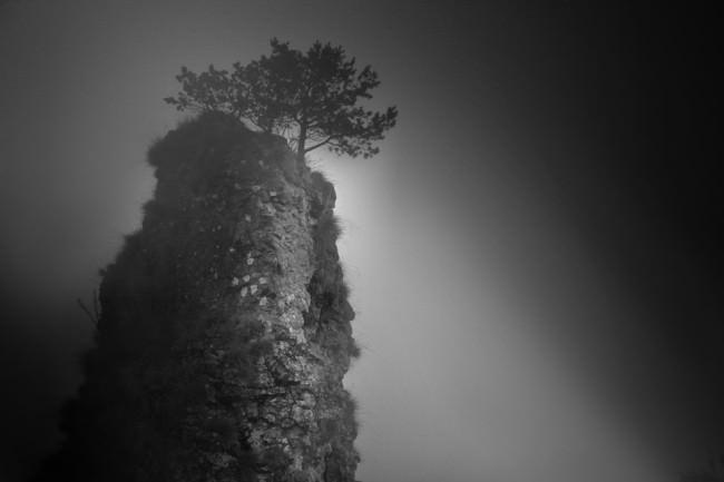 Froschperspektive. Wir sehen hoch zu einem Baum auf einem Felsen.