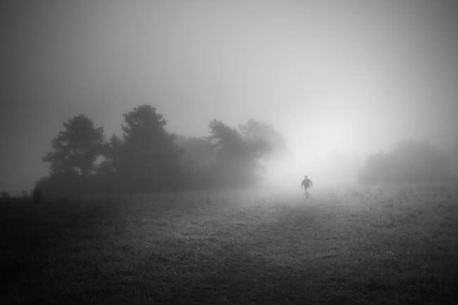 Nebel, Feld und Wald.