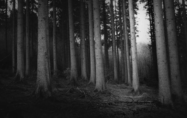 Bäume, Wald, Bäume, Wald.