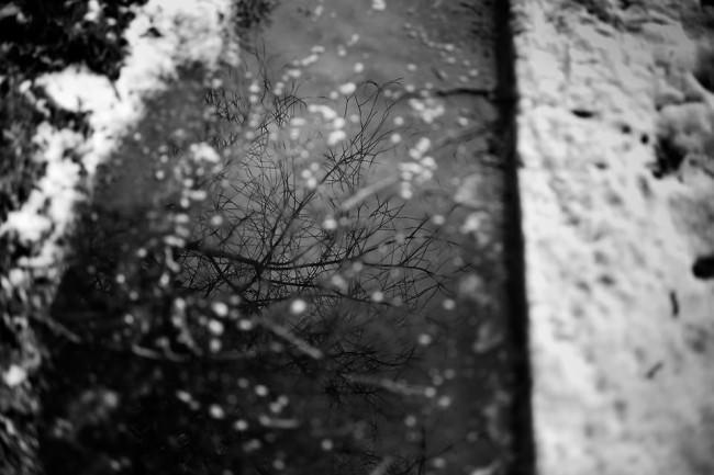 Spiegelung in einer Pfütze