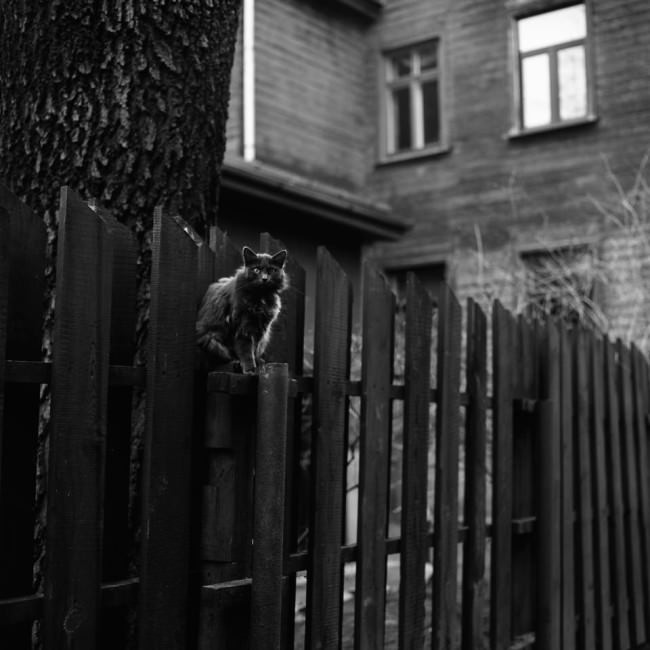 Eine Katze sitzt auf einem Zaun.