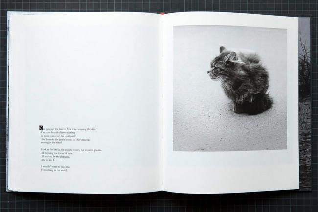 Einblick in ein Buch mit Foto einer Katze.