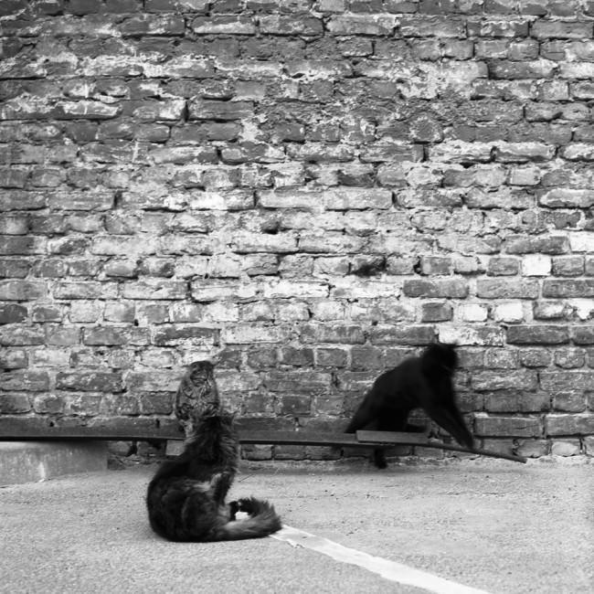 Drei Katzen vor einer Mauer.