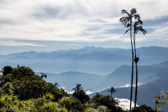 Landschaft mit Palmen im Vordergrund und Bergen am Horizont.
