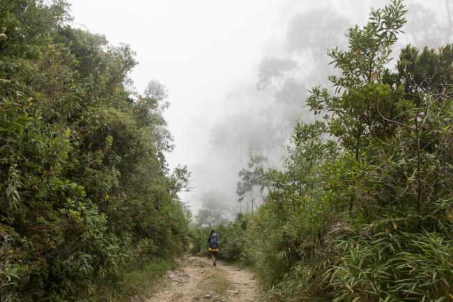 Ein Weg im Urwald.
