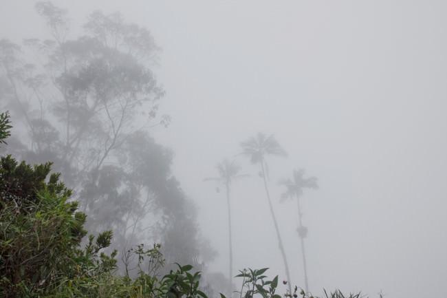 Urwald im Nebel.