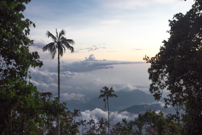 Dunkle Palmen im Vordergrund geben einen Blick auf die Wolken und ein Tal frei.