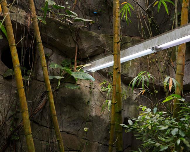 Bambus und Neonleuchten