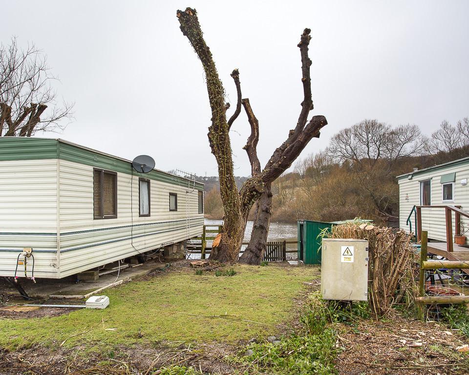 Ein kahlgeschnittener Baum neben einem Wohnwagen.