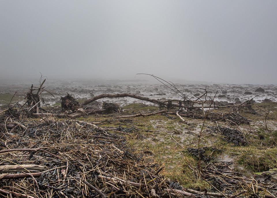 Treibholz lagert sich auf einer Wiese an.