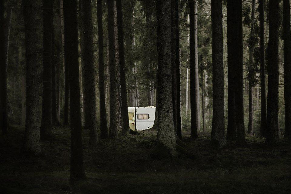 Ein Wohnwagen schimmert zwischen vielen Bäumen eines hochgewachsenen Waldes hindurch.