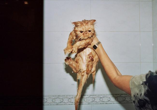 Eine nasse Katze