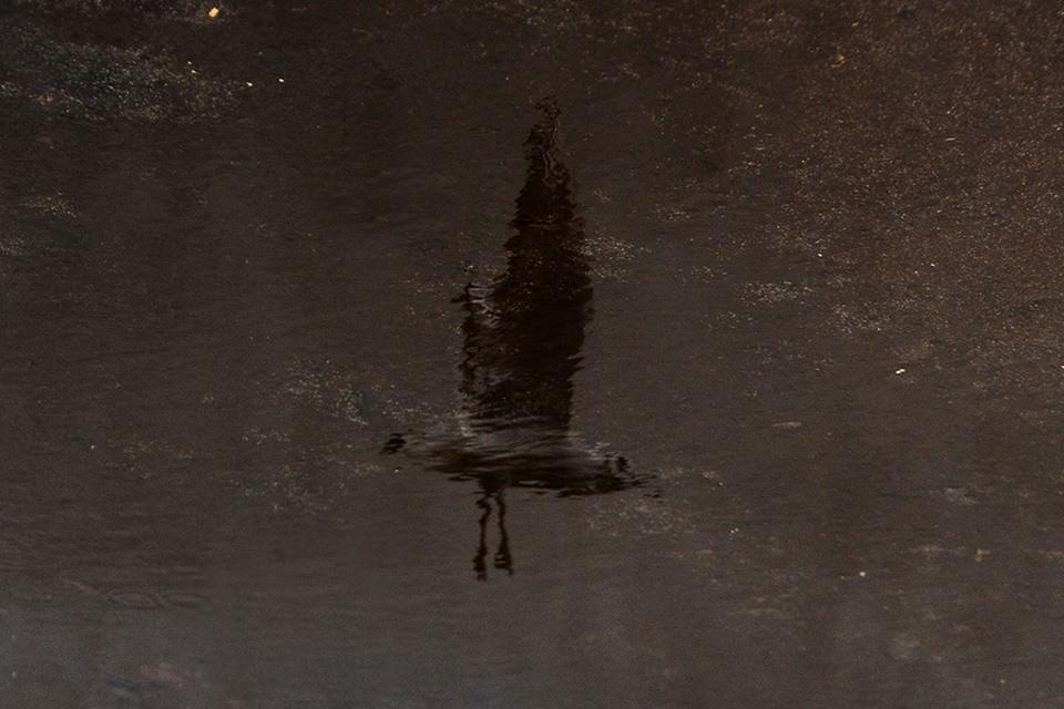 Spiegelung einer fliegenden Möwe im Wasser.