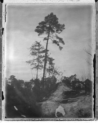 Gescanntes Negativ von Bäumen