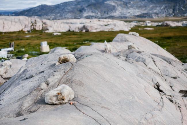 Angekettete Hunde auf einem Felsen.