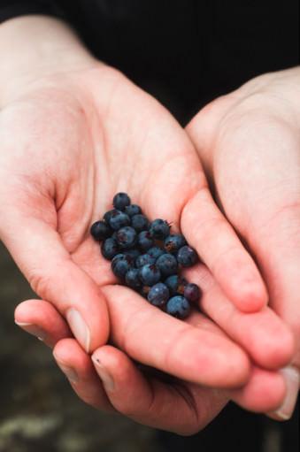 Eine Hand voller blauer Beeren.