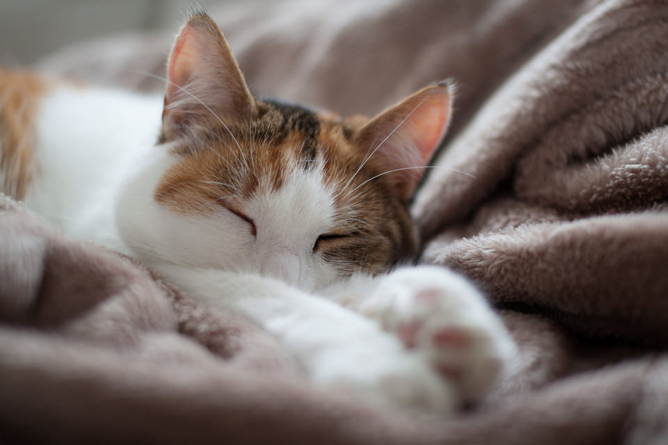 Eine Katze streckt sich schnurrend aus.