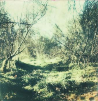 Blattloses Buschwerk und Gras, seitlich von Sonnenlicht beschienen.