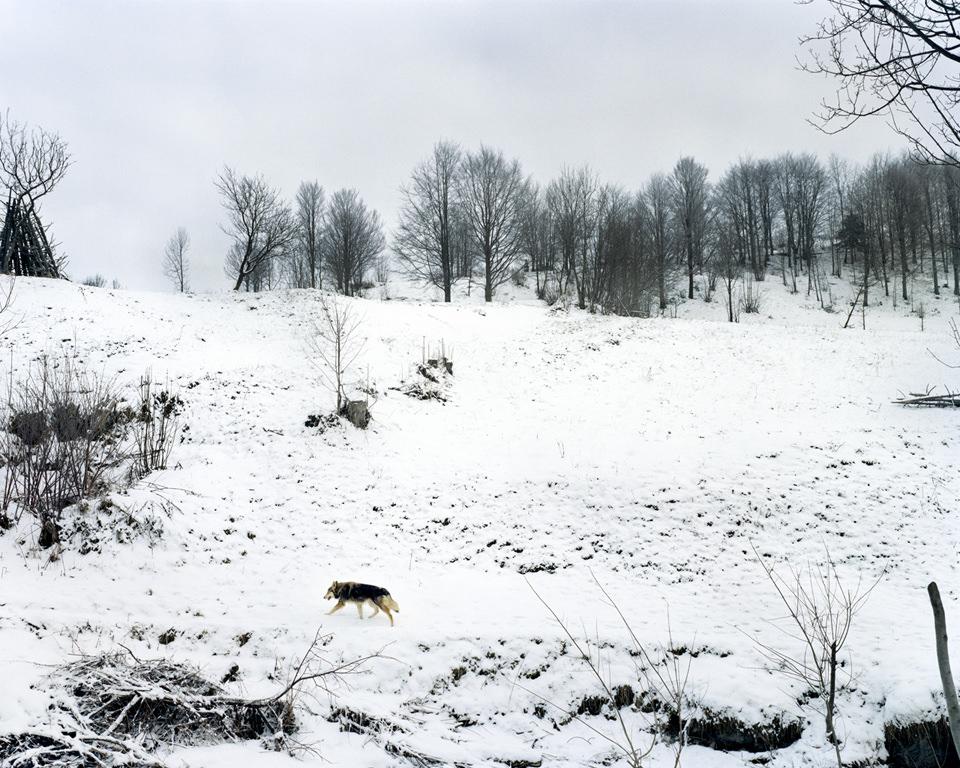Eine Schneelandschaft und ein Hund darin.