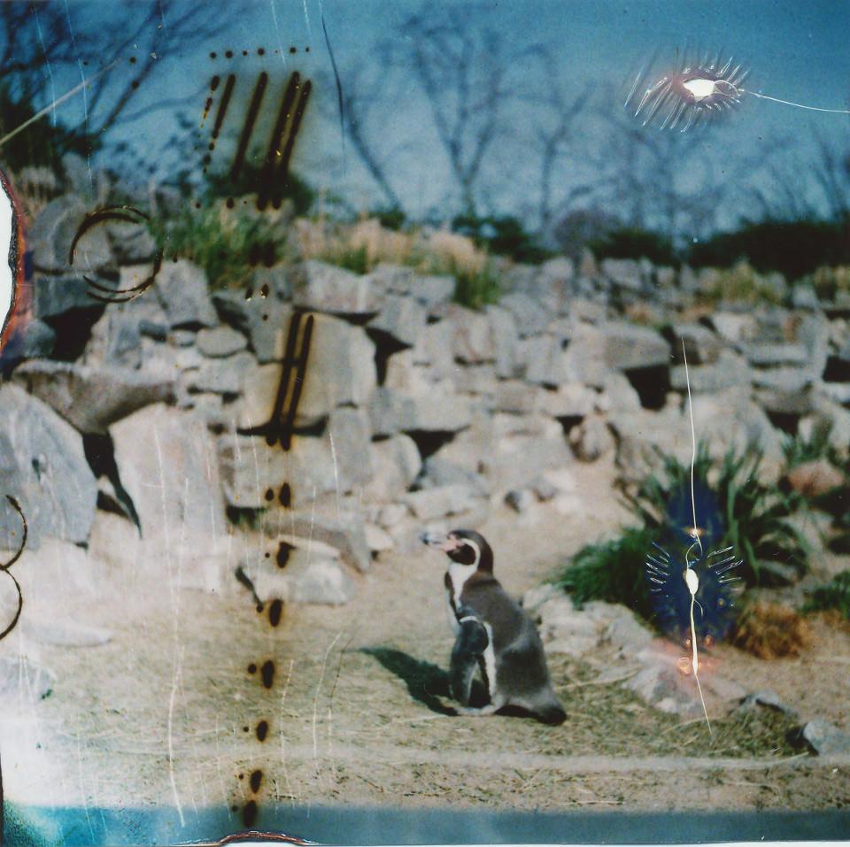 Ein zerkratzes Foto eines Pinguins.