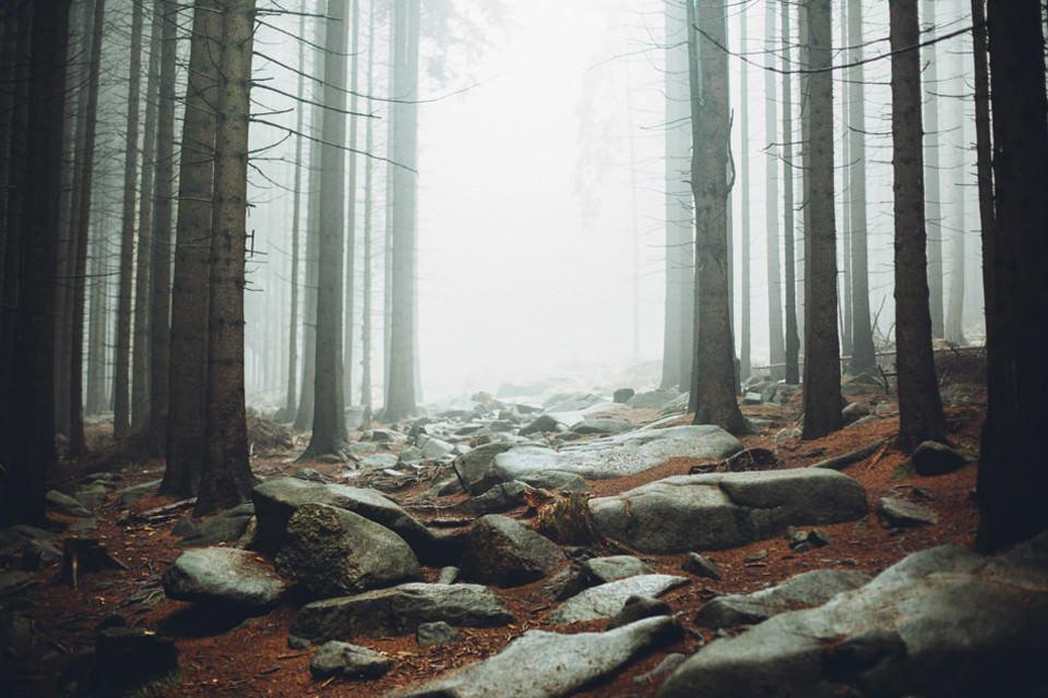 Eine Waldlandschaft.