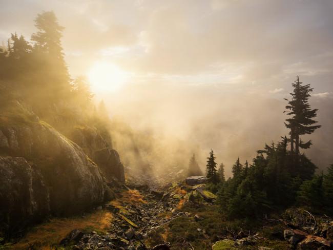 Im Gegenlicht: Wald und Felsen.