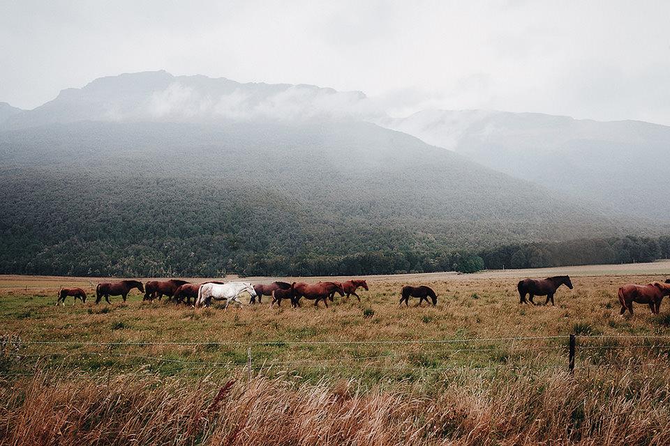 Pferde vor nebelverdecktem Berg in der Prärie